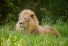 Prepare Ye the Way for the Lion of Judah!
