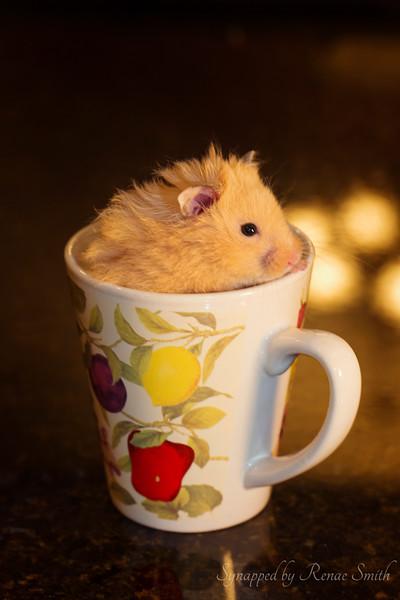 Who Drank the Tea?!