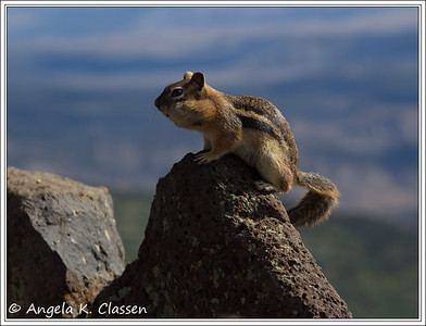 Do my puffy cheeks make me look fat? asks this little ground squirrel