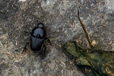 Unknown Black Bug