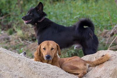 Free Range Dogs