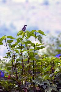 Bird on a Bush