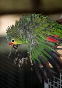 Kiwi Shower
