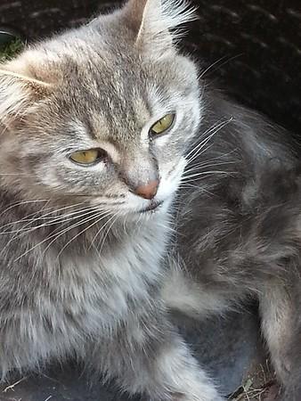 Dreamy Eyed Kitty
