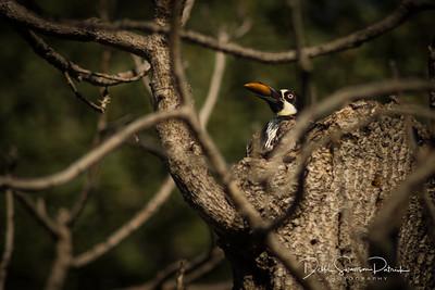 Bird and Acorn