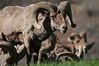 Horns Aplenty