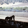 Salinas Rodeo - Slides Developed August 1962