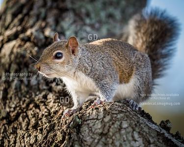 Florida Tree Rat