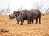 Rhino Sunrise