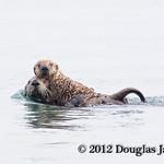 Otter Hugs