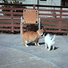 Butterscotch meets Missy! - March 1964