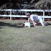 Carol and Missy playing baseball - March 1964