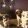 Missy, Alisha, and Layla - Picture developed July 1979