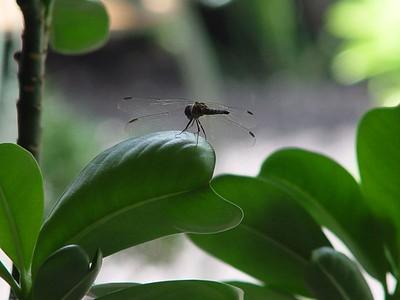 Dragonfly (September 10, 2005)