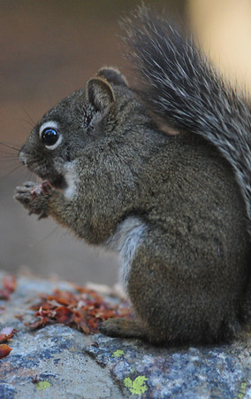 Squirrelyque