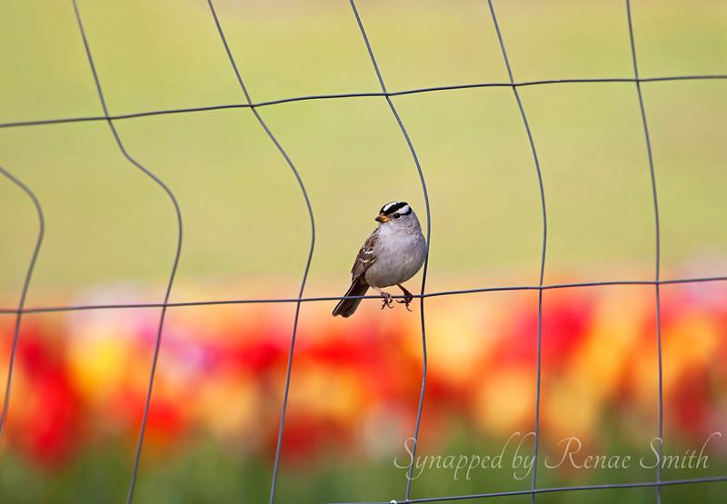 Sittin' on the Fence...