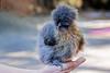 Fuzzy Baby