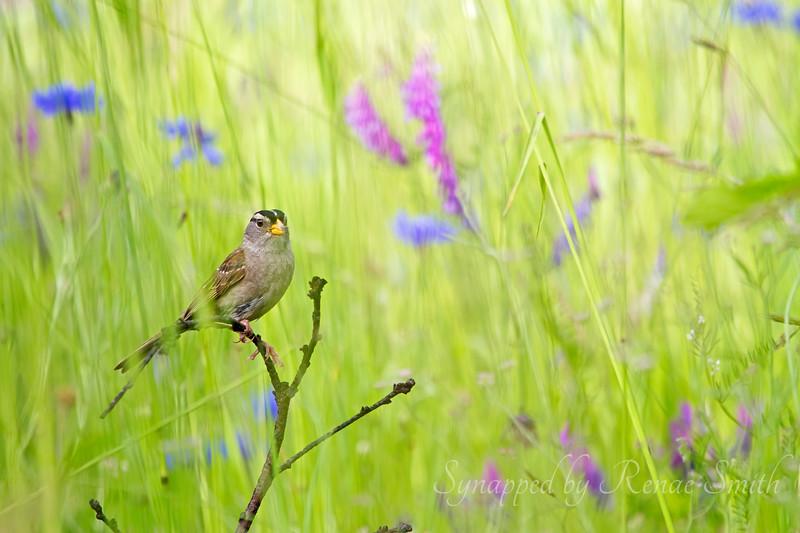 Wildflower Hide 'n Seek