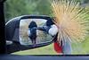 Mirror, Mirror on the Car...