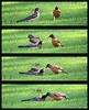 The Big Beggar Bird