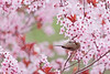 Pink Ambrosia Delight