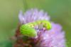 Flower-escent