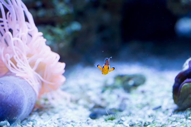 Little Fishy in a Big World