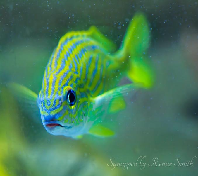 Maude Fish