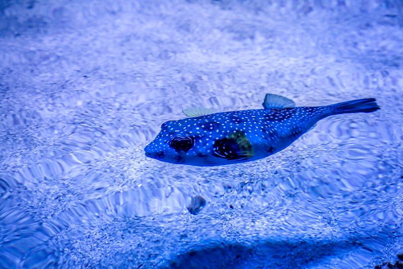 Style Fish