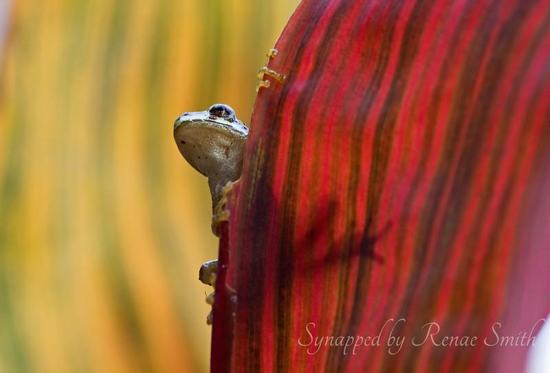 Fall 'n Frog