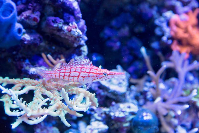Red Fish, White Fish, Plaid Fish