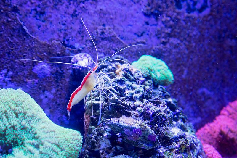 Ol' Shrimpy