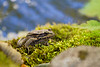 Bed of Mosses
