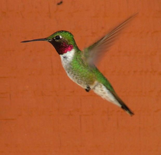 hummingbird, no post-processing
