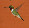 hummingbird, no post-processing
