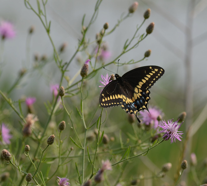 A Butterfly Fluttered By