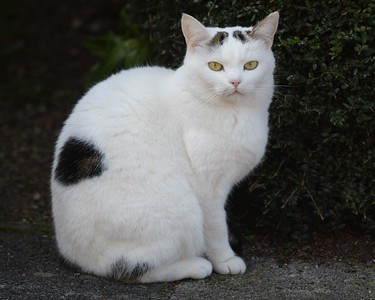 Crawford Cat