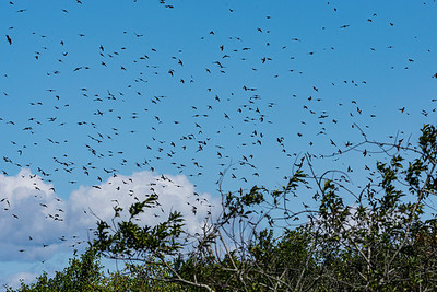 A Kettle of Swallows