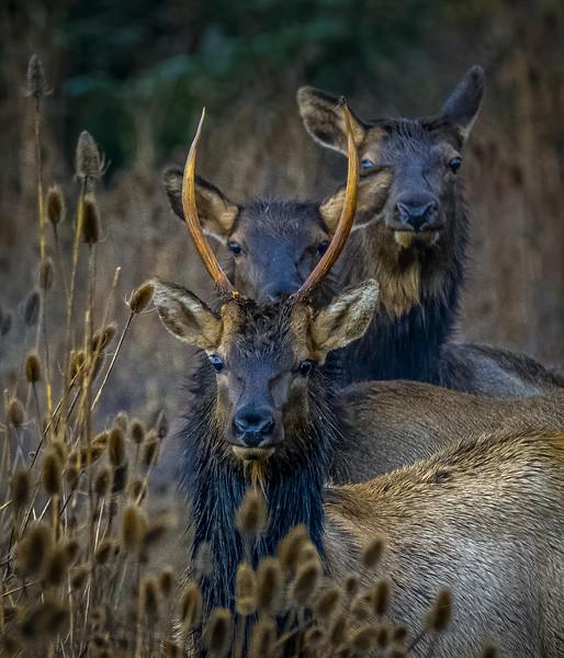 6 eyes 2 antlers