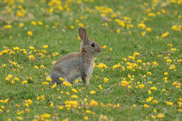 Bunny - Greenham Common - 17th June 2018
