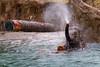 morning swim at the oregon zoo