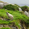 Ring of Beara, Ireland