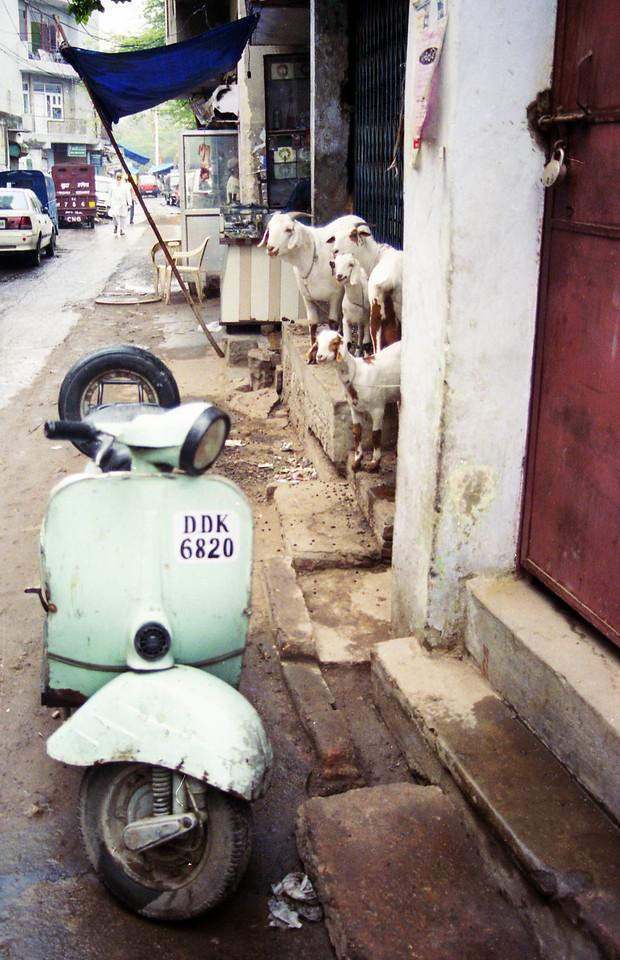 Delhi Goats