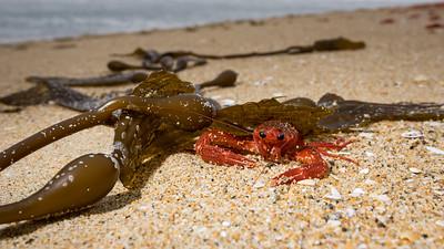 Hiding Under Kelp