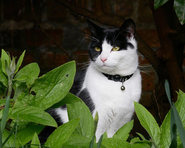 St Nicholas Church Yard Cat