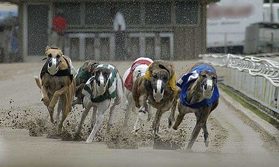 At The Track - Greyhounds