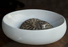 Bowl of Kitten_DSC5598