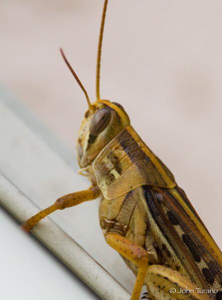 Side Details of a Grasshopper