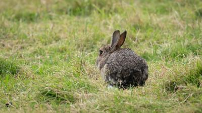 Still Bunny