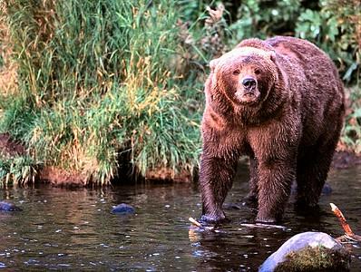 Bears%20%288%29